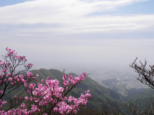 鎌ヶ岳のアカヤシオと雲母峰