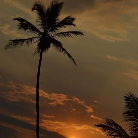 sunset in goa by Harshit Bansal - Landscapes Sunsets & Sunrises ( clouds, palm tree, goa, sunset, sun )