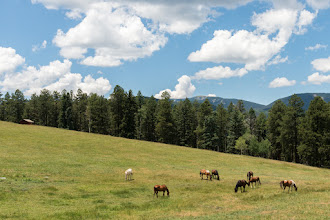Photo: Horses grazing on high country meadow, Pecos River Canyon