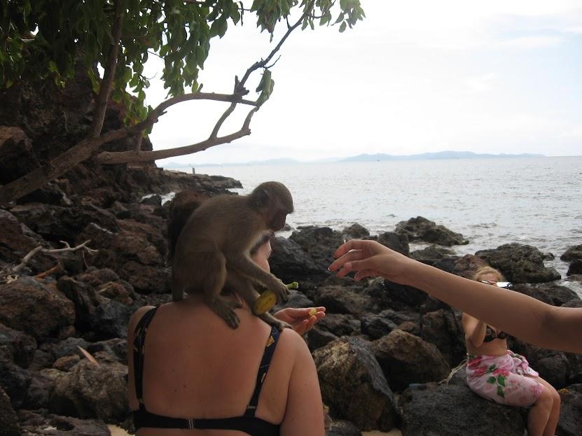 остров Ко Лан обезьяны