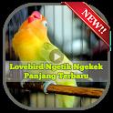 Lovebird Ngetik Ngekek Panjang Terbaru icon
