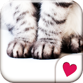Cute wallpaper★Cat Hands