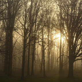 Fog, Sun and Trees by Thomas Fitzrandolph - Landscapes Sunsets & Sunrises ( nature, fog, niagara county ny, trees, nikon d5200, sunrise, morning, lockport ny, sun,  )