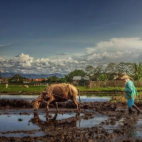 plowing by Joemar Cabasan - City,  Street & Park  Neighborhoods