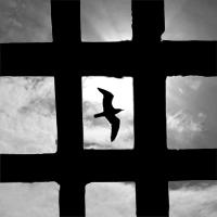 Freedom di Silvio Lorrai