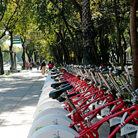 Bicycles by Cristobal Garciaferro Rubio - Transportation Bicycles ( mexico city, ecobici, reforma street, trees, bici, bicycle )