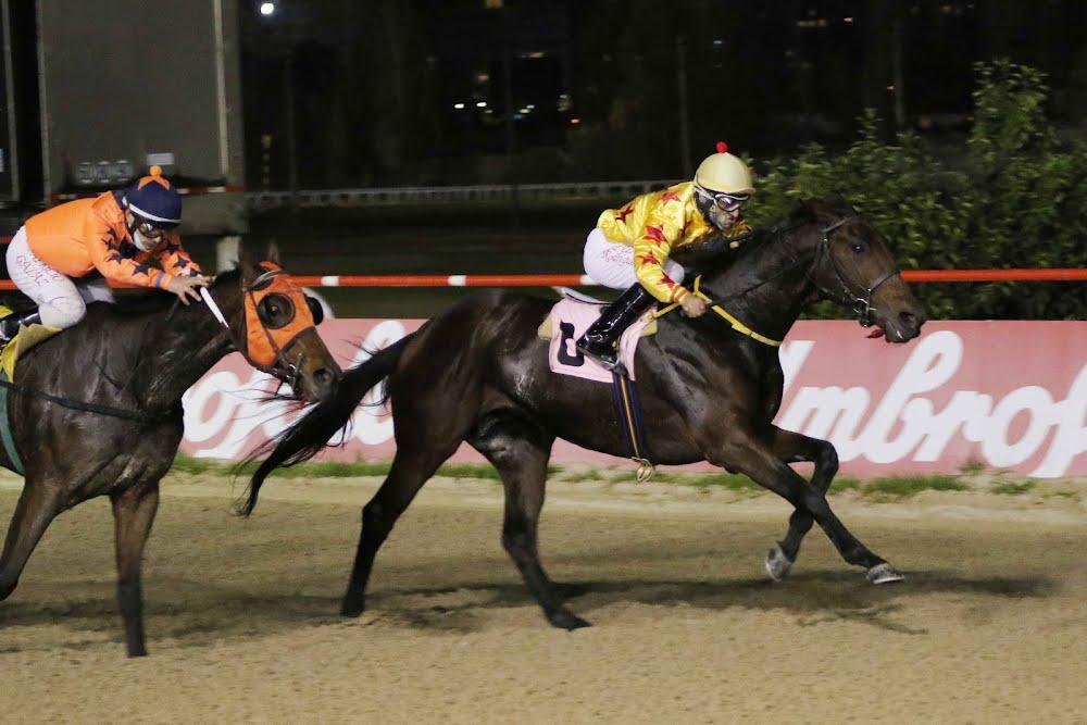 Poeta Arabe (Arabian Spirit) se adjudica Handicap (1100m-Arena-VSC).