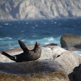 Sea Lion South Africa by Kedar Banerjee - Novices Only Wildlife ( nature, beauty in nature, water, sea, lion, wildlife )