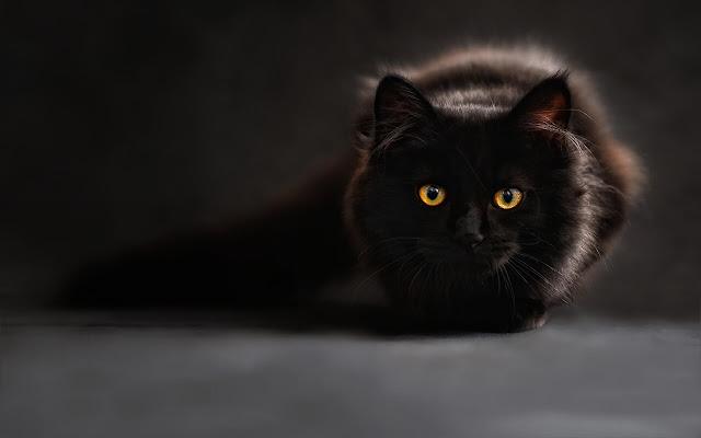 Black Cat - New Tab in HD