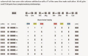Photo: T/U = 00,    C = 01,    A = 10,    G = 11.  All black family codons are palindrome pattern Hox codons meaning they are the same base2 pattern forwards and backwards.  It is interesting that Hox codons almost always occur the most in gene sequences we have studied.  Why in every case do member pairs in same color families that code for the same amino acids break out into 81:45 or 77:49 relationships?  -------------------------- Note: 51 GUG val should be 110011 not 101011.
