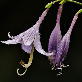 by Lenka Bryndová - Flowers Tree Blossoms (  )