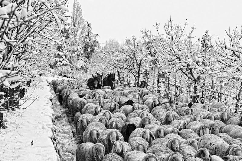 Processione animale..... di Stefano Muzzarelli