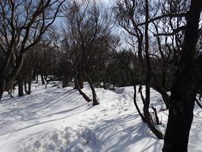 平坦地には雪が残る