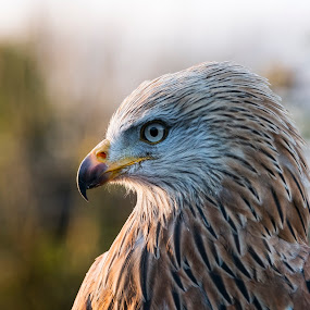 by Sean Kirkhouse - Animals Birds