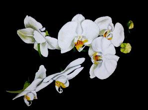 Photo: 425, Нетронина Наталья, Серия Цветочный калейдоскоп -Орхидея белая, Масло, замша (живопись по бархату), 40х30см,