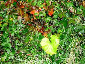 Photo: het gebladerte in de herfst