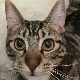 Those Ears! by Lori Fix - Animals - Cats Portraits