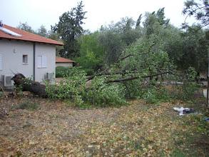 Photo: רוח סערה עברה בחצר והפילה ענפים ועצים צילם שלמה גולן