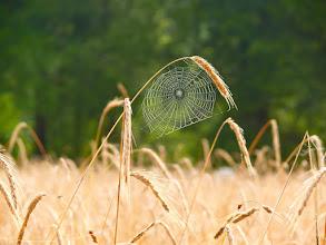 Photo: spider web