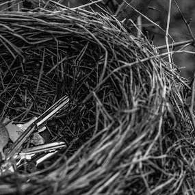 In the thieves nest by Thurisaz Photography - Artistic Objects Other Objects ( creative, black and white, keys, hay, nest, thieve, shape, branches,  )