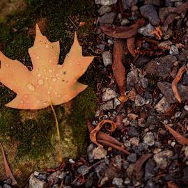 The Fall by Madhujith Venkatakrishna - Nature Up Close Leaves & Grasses (  )