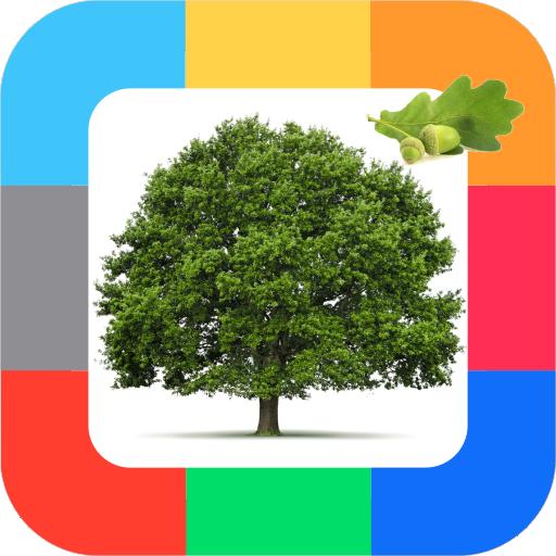 Развивающие карточки Деревья