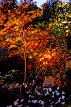 Photo: Foliage of special plants like Japanese Maple glows with proper lighting.