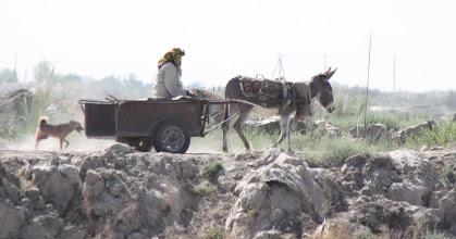 Photo: Day 161 - Donkey, Cart, Woman and Dog