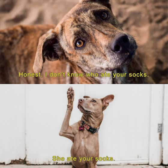 Who Ate Your Socks - Instagram Post Template