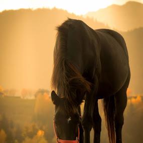 quiet by Lili Screciu - Animals Horses (  )