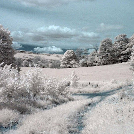 Infrared landscape by Heather Catherine - Landscapes Prairies, Meadows & Fields