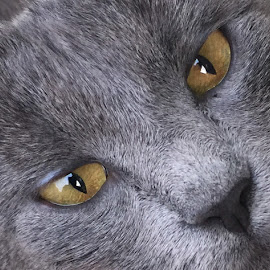 Smokey by Beth Hartung - Novices Only Pets