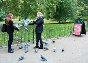 Photo: St James's Park Westminster  http://www.turistika.cz/cestopisy/londyn-london-eye-trafalgar-square-palace-of-westminster-big-ben-piccadilly-circus-eurotunel