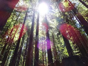Photo: Sun peeping through the woods