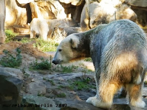 Photo: Knut ist noch etwas skeptisch ;-)