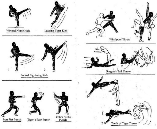 learn martial arts 2.0 2