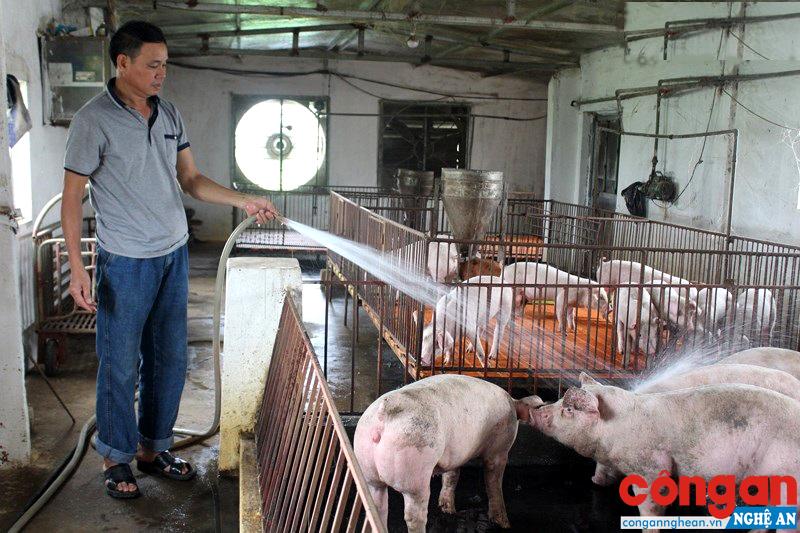 Người chăn nuôi Nghệ An chủ động phòng, chống dịch tả lợn Châu Phi