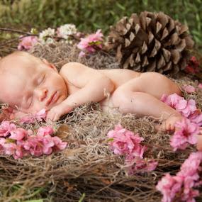 Wren Sequoia by Christine Lester-Deats - Babies & Children Babies ( bird, pinecone, pink flowers, wren, nest, infant, sequoia, baby, newborn )