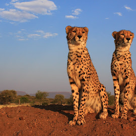 Two Brothers by Eli Walker - Novices Only Wildlife