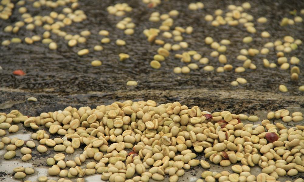 sustainable coffee processing