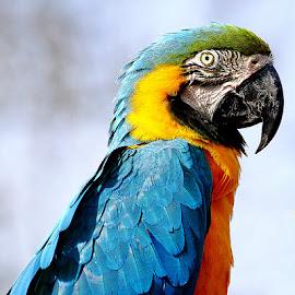 Coco by Gérard CHATENET - Animals Birds