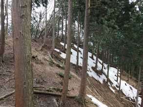 林道へ踏み跡を進む