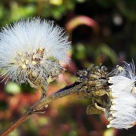 by Megi Šajn - Nature Up Close Other plants ( white, nature, plants, up close, natural light )