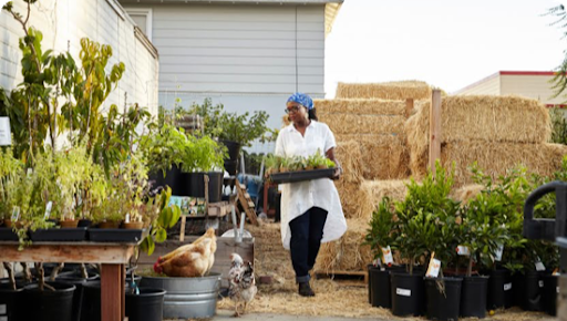A woman working in her plant nursery business.