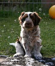 Photo: die Toffie - ein schönes Foto von ihr