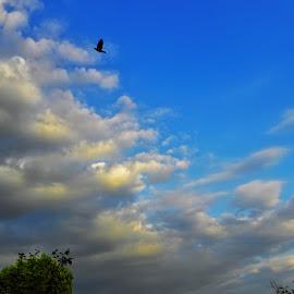 Gazing the sky by Nicoleta Gradinaru - Landscapes Cloud Formations ( clouds, blue sky )