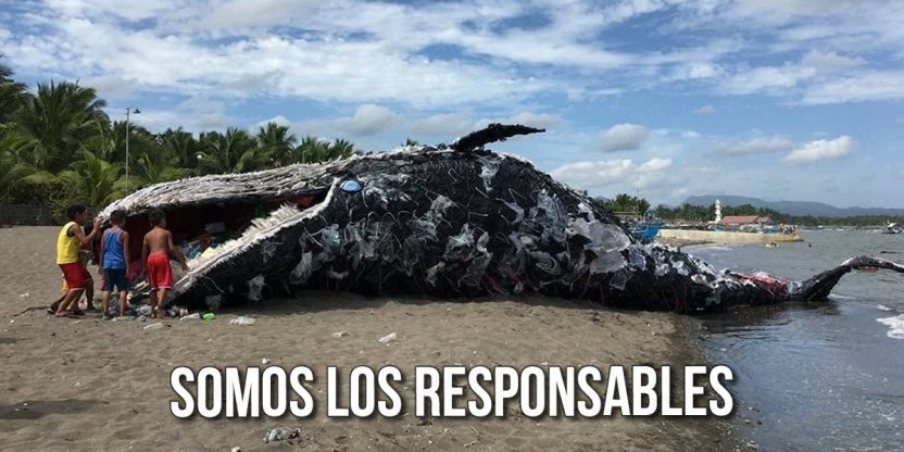Aparece una ballena muerta en una playa de España con 29 kilos de plástico en su estómago…