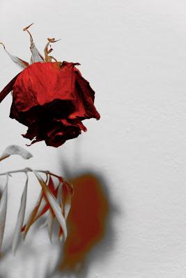 red shadow di Mav