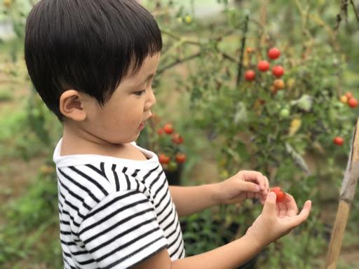 ミニトマト食べてる