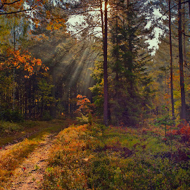by Stanley P. - Landscapes Forests